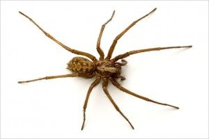 Columbia Certified Pest Control Spider Control