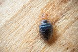 Bed Bug Exterminator Columbia SC