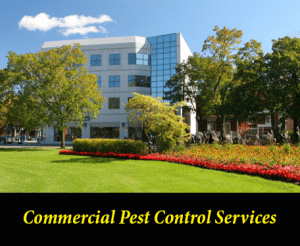 Commercial Pest Control Services in Columbia, SC