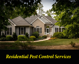 Residential Pest Control Services in Columbia, SC